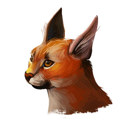 Caracal wild cat isolated digital art illustration. Medium-sized wild cat from Africa, Middle East, Central Asia and India. Caracal caracal with tufted ears. Hunting season, wildlife feline portrait. Stockfoto