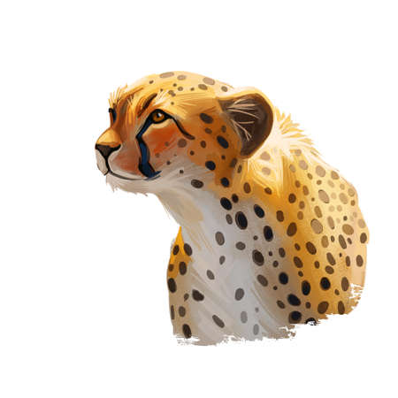 Cheetah large cat from North, Southern East Africa isolated digital art illustration. Southeast African cheetah hand drawn portrait. Northeast asiatic cheetah. Hunting season wildlife feline portrait