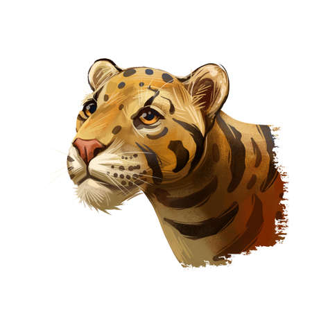 Clouded leopard Neofelis nebulosa wild cat occurring from Himalayan, Asian China. Digital art illustration of mainland clouded leopard or Sunda clouded leopard, hunting season wildcat portrait.