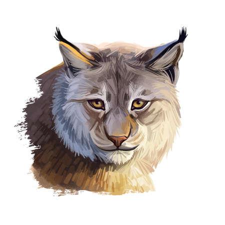 Eurasian lynx medium-sized wild cat from Europe, Central Asia and Siberia. Digital art illustration of lynx-lynx animal hand drawn portrait. Northern lynx, Turkestan Caucasian lynx, hunting season