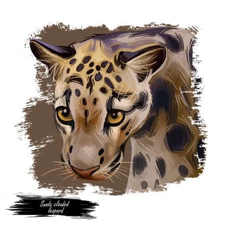 Sunda clouded leopard watercolor portrait closeup. Neofelis diardi animal from Feline mammals family. Medium-sized catlike creature with brown fur with sports. Wild big cat digital art illustration