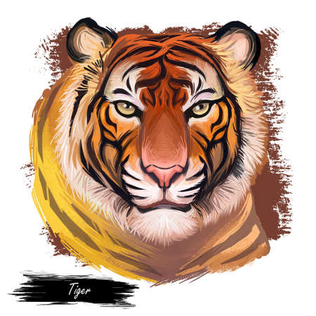 Tiger watercolor portrait in closeup. Hand drawn panthera tigris, wild cat of large size. Felidae family member mammal with furry coat. Predator wildlife, carnivore beast digital art illustration 写真素材