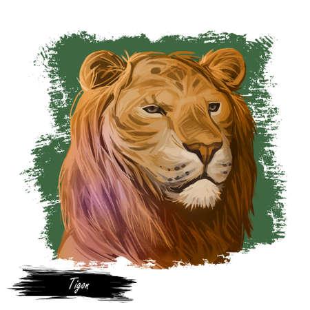 Tigon animal watercolor portrait in closeup. Animalistic drawing of tigon, hybrid mammal. Wild car of feline family predator with furry coat. Felidae hunter carnivore creature digital art illustration