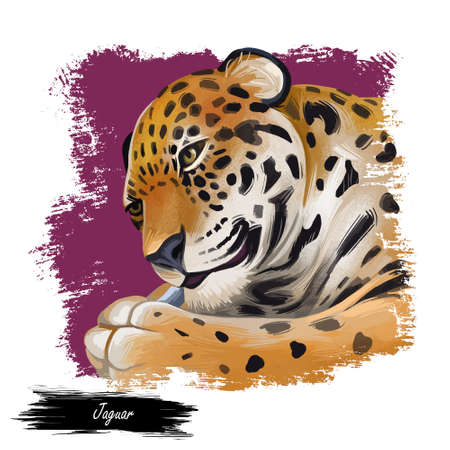 Jaguar portrait closeup of animal. Panthera once type of carnivore fauna. Wildlife of South America, drawn mammal with furry coat. Feline big cat with snout, watercolor digital art illustration