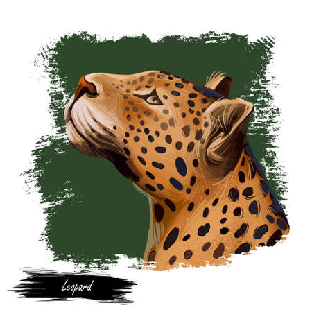 Leopard watercolor portrait of exotic animal. Profile of panther looking aside. Felidae family member, mammal with furry coat with dots. Carnivore panthera pardus wildlife, digital art illustration