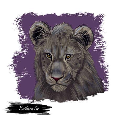 Panthera leo watercolor portrait in closeup. Mammal with black furry coat, feline animal. Predator from wild environment drawing with text brush. Carnivore creature digital art illustration. 写真素材