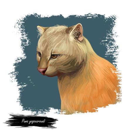 Herpailurus yagouaroundi portrait of animal. Watercolor drawing of Puma. Eyra profile, mammal from Felinae family. Catlike predator, feline creature face and text. Jaguarundi digital art illustration Stock Photo