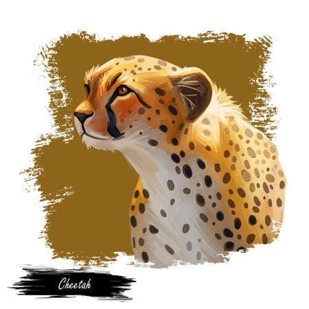 Cheetah large cat from North, Southern East Africa isolated digital art illustration. Southeast African cheetah hand drawn portrait. Northeast asiatic cheetah. Hunting season, wildlife feline portrait 写真素材