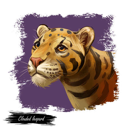 Clouded leopard Neofelis nebulosa wild cat occurring from Himalayan, Asian China. Digital art illustration of mainland clouded leopard or Sunda clouded leopard, hunting season wildcat portrait