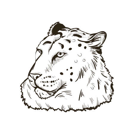Leopard portrait of exotic animal isolated vector illustration sketch. Monochrome profile of panther looking aside. Felidae mammal with furry coat with dots. Carnivore panthera pardus wildlife