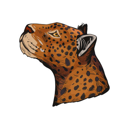 Leopard portrait of exotic animal isolated vector illustration sketch. Profile of panther looking aside. Felidae family member, mammal with furry coat with dots. Carnivore panthera pardus wildlife Stock Photo