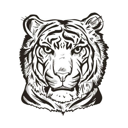 Tiger portrait in closeup isolated vector illustration sketch. Monochrome hand drawn panthera tigris, wild cat of large size. Felidae with furry coat. Predator wildlife, carnivore beast tiger wild cat