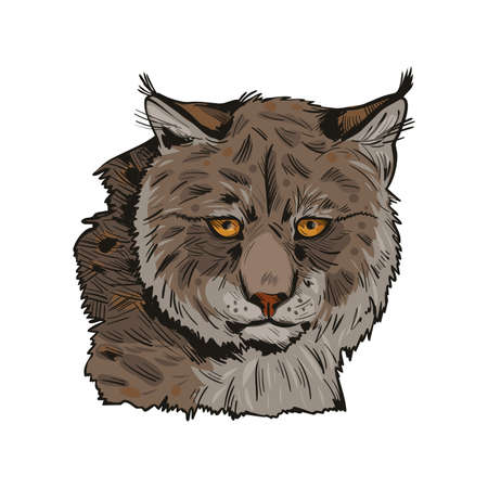 Eurasian lynx isolated vector illustration. Vector hand drawn wild animal sketch icon. Color drawing of medium-sized wild cat animal portrait. Northern lynx-lynx, Turkestan and Caucasian hunting season Imagens
