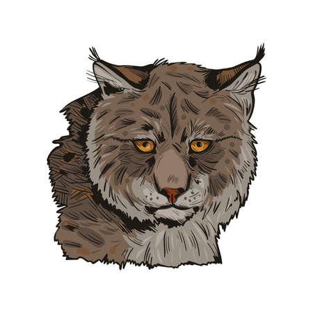 Eurasian lynx isolated vector illustration. Vector hand drawn wild animal sketch icon. Color drawing of medium-sized wild cat animal portrait. Northern lynx-lynx, Turkestan and Caucasian hunting season Stock Photo
