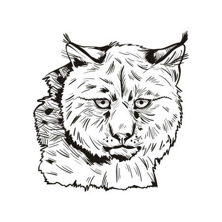 Eurasian lynx isolated vector illustration. Monochrome hand drawn wild animal sketch icon. Black and white drawing of northern lynx-lynx portrait, Turkestan and Caucasian hunting season, safari hunt Stock Photo