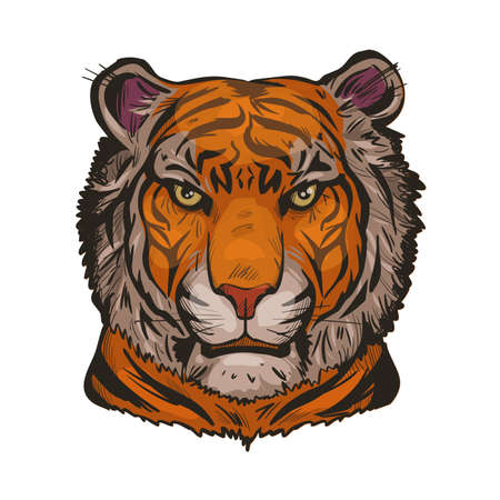Tiger portrait in closeup isolated vector illustration sketch. Hand drawn panthera tigris, wild cat of large size. Felidae mammal with furry coat. Predator wildlife, carnivore beast, tiger wild cat