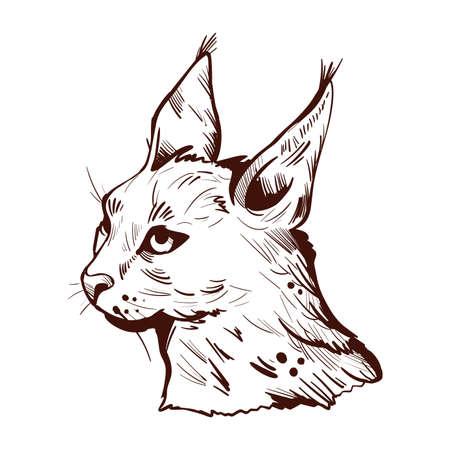 Caracal wild cat isolated vector illustration monochrome sketch icon. Hunting season, wildlife feline portrait. Hand drawn caracal sketch animal. Medium sized wild cat. Caracal caracal with tufted ear Stock Illustration - 134646976