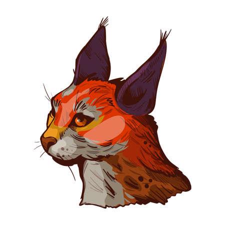 Caracal wild cat isolated vector illustration. Hand drawn color aracal caracal sketch animal. Medium-sized wild cat. Caracal caracal with tufted ears. Hunting season, wildlife feline portrait