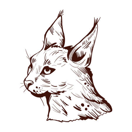 Caracal wild cat isolated vector illustration monochrome sketch icon. Hunting season, wildlife feline portrait. Hand drawn caracal sketch animal. Medium-sized wild cat. Caracal caracal with tufted ear