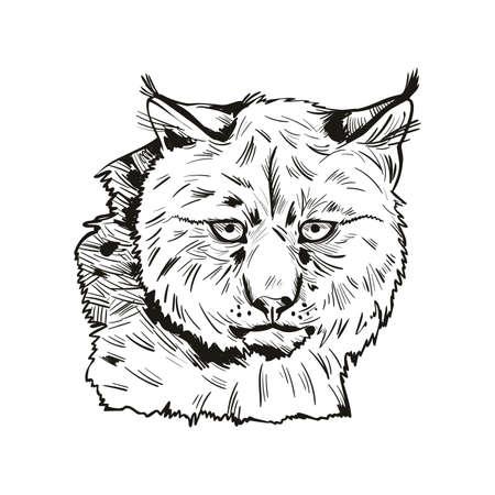 Eurasian lynx isolated vector illustration. Monochrome hand drawn wild animal sketch icon. Black and white drawing of northern lynx-lynx portrait, Turkestan and Caucasian hunting season, safari hunt Illustration