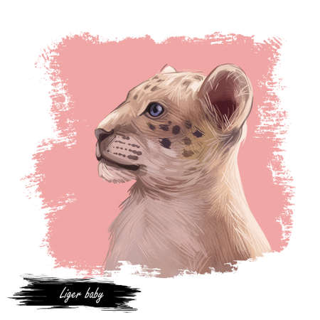 Liger hybrid offspring of lion and tiger, watercolor baby tabby portrait closeup. Animal digital art illustration. Fauna of India, carnivora family. Asian breed carnivorous depiction in profile
