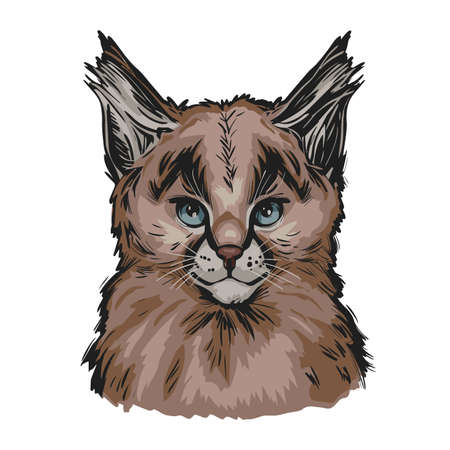 Caracal baby tabby, wild cat isolated hand drawn illustration. Wild cat from Africa, Middle East, Central Asia. Caracal caracal with tufted ears. Hunting season, wildlife feline portrait sketch
