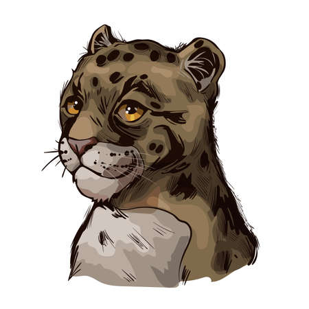 Clouded leopard baby tabby Neofelis nebulosa wild cat from Himalayan isolated sketch. Digital art illustration of mainland clouded leopard or Sunda clouded leopard, hunting season wildcat portrait
