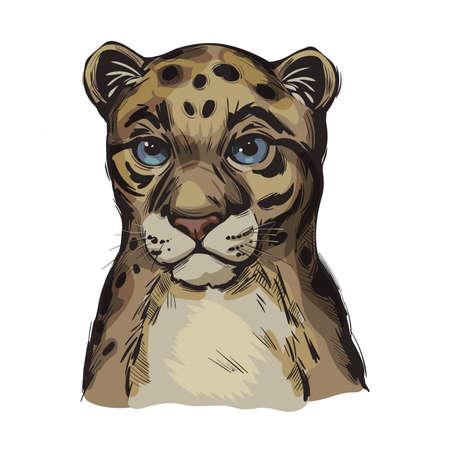 Sunda clouded leopard baby tabby vector portrait closeup isolated sketch. Neofelis diardi animal from Feline mammals. Medium-sized catlike animal fur with sports. Wild big cat, hand drawn illustration