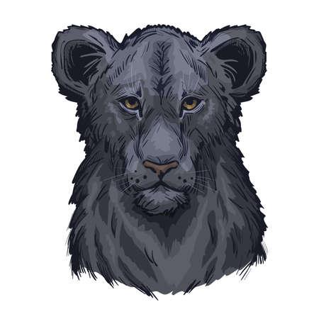 Panthera leo vector retrato de bebé atigrado en primer plano aislado dibujo. Mamífero con pelaje peludo negro animal felino. Depredador del medio ambiente salvaje, dibujo. Ilustración de vector dibujado a mano de criatura carnívora