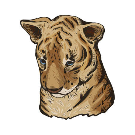 Tiger baby tabby vector portrait in closeup isoated sketch. Hand drawn panthera tigris, large wild cat. Felidae mammal with furry coat. Predator wildlife, carnivore beast, hand drawn illustration