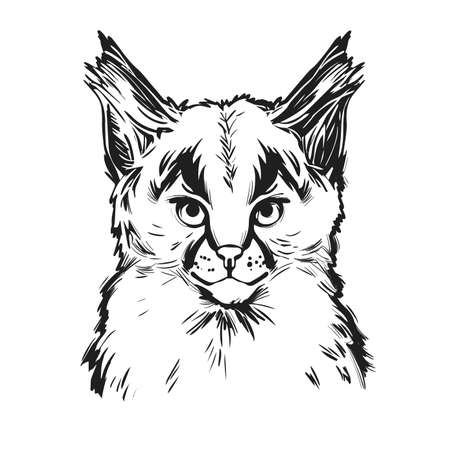 Caracal baby tabby, wild cat t-shirt print, isolated monochrome design, hand drawn illustration. Wild cat vector caracal caracal with tufted ears. Hunting season, wildlife feline portrait sketch