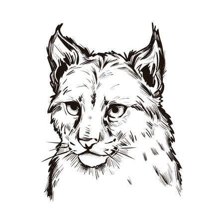 Eurasian lynx baby tabby, medium-sized wild cat isolated sketch t-shirt print, monochrome design. Vector illustration of lynx-lynx animal hand drawn portrait. Northern lynx, hunting season mascot