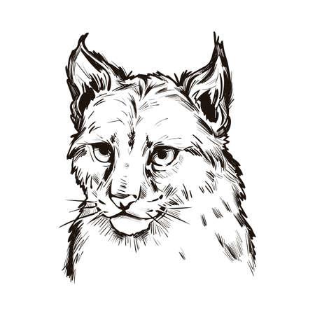 Eurasian lynx baby tabby, medium-sized wild cat isolated sketch t-shirt print, monochrome design. Vector illustration of lynx-lynx animal hand drawn portrait. Northern lynx, hunting season mascot