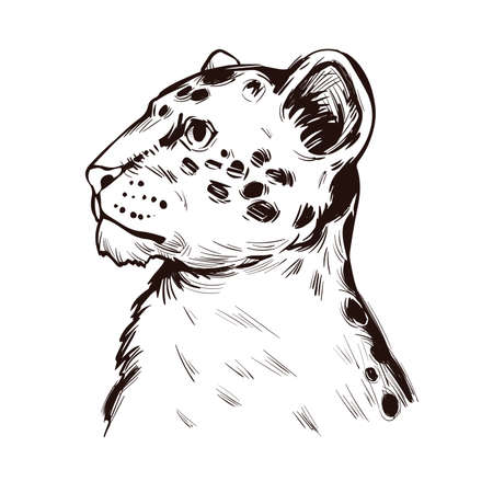 Liger hybrid offspring lion tiger, vector baby tabby portrait closeup isolated sketch t-shirt print, monochrome. Animal hand drawn illustration. Fauna of India asian breed carnivorous vector drawing