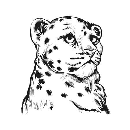 Snow leopard baby tabby portrait in closeup isolated sketch t-shirt print, monochrome. Vector spotted leopard hand drawni llustration of Panthera uncia. Mammal with thick fur feline. Catlike carnivore
