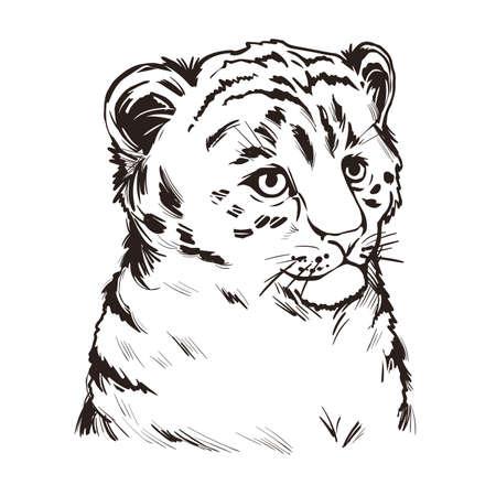 Tigon baby tabby animal vector portrait isolated sketch t-shirt print, monochrome. Animalistic drawing of tigon hybrid. Wild cat of feline predator. Felidae hunter carnivore hand drawn illustration Vectores