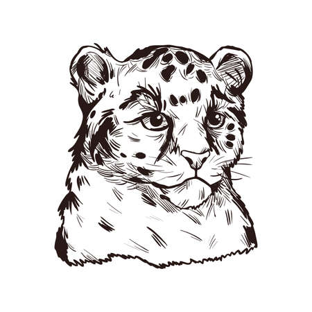 Leopard babby tabby vector portrait of exotic animal isolated sketch t-shirt print, monochrome. Panther felidae mammal with furry coat with dots. Carnivore panthera pardus wildlife hand drawn illustration 矢量图像