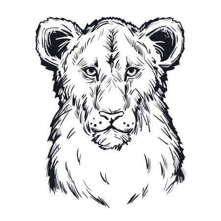 Panthera leo vector baby tabby portrait in closeup isolated sketch t-shirt print, monochrome. Black furry coat feline animal. Predator of wildlife drawing. Carnivore creature hand drawn illustration