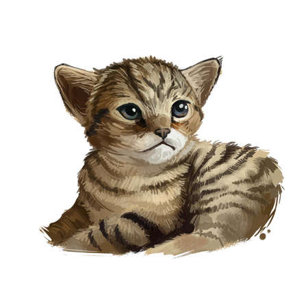 Chausie cat isolated on white. Digital art illustration of hand drawn kitty for web. Kitten looks like from jungle and have big ears. Coat of pet brown, black ticked tabby animal pet, domestic breed