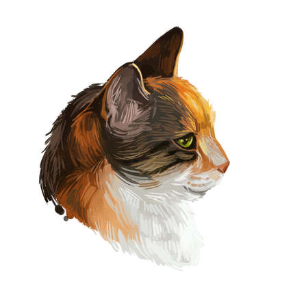 Cyprus or Cypriot cat isolated on white. Digital art illustration of hand drawn kitty for web. Sleeping kitten with soft and wooly coat. Watercolor picture of pet animal pet, Domestic breed.