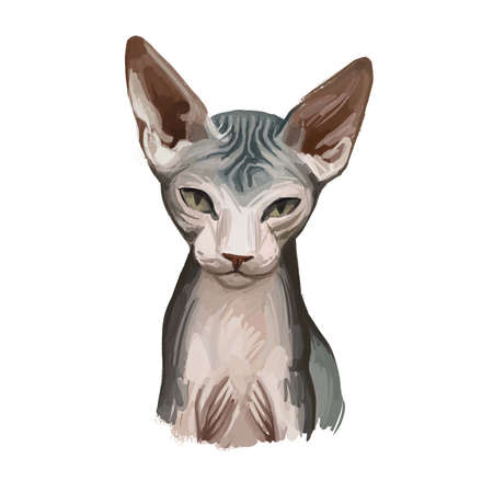 Donskoy, Don Sphynx or Russian Hairless cat isolated on white. Digital art illustration of hand drawn kitty for web. Hairless pet with large ears, almond shaped eyes and soft skin animal pet breed.