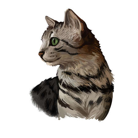 Egyptian or Arabian Mau cat isolated on white. Digital art illustration of hand drawn kitty. Kitten short haired medium size, have bicolor, beige and grey, coat, green eyes, domestic breed animal