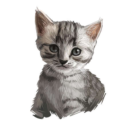 Egyptian or Arabian Mau cat isolated on white. Digital art illustration of hand drawn kitty. Kitten short haired medium size, have bicolor, beige and grey, coat, green eyes animal pet, Domestic breed