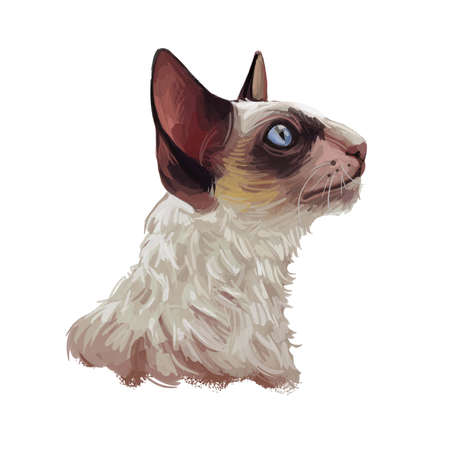 Cornish Rex cat isolated on white. Digital art illustration of hand drawn kitty for web. Face of kitten with big brown ears blue eyes. Watercolor picture pet with coat, domestic breed feline animal Zdjęcie Seryjne