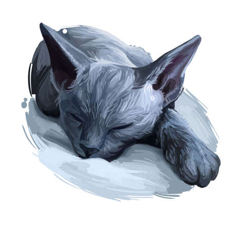 Devon Rex cat isolated on white. Digital art illustration of hand drawn kitty for web. Sleeping short haired kitten with curly and very soft coat. Pet have ashy grey fur, domestic breed animal