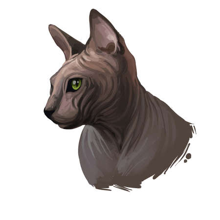 Donskoy, Don Sphynx or Russian Hairless cat isolated on white. Digital art illustration of hand drawn kitty for web. Hairless pet with large ears, almond eyes and soft skin, domestic breed animal Zdjęcie Seryjne