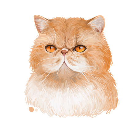 Exotic shorthair kitten isolated on white background. Digital art illustration of hand drawn kitty. Sitting short haired cat animal with silky coat and deep eyes. Lying pet with sable fur watercolor Zdjęcie Seryjne