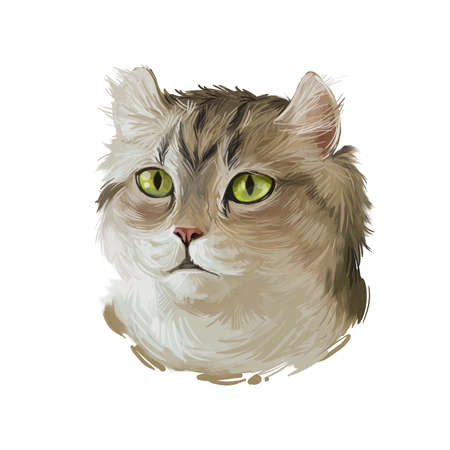 Highlander kitten lying on paw on white background. Digital art illustration of hand drawn kitty for web. Head of kitten with deep blue eyes looking. Portrait view of domestic animal with mustache Zdjęcie Seryjne