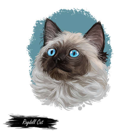Ragdoll with thick, rabbitlike fur digital art illustration. Ragamuffin breed of domestic cat isolated hand drawn portrait. Domestic pussy cat print for web, cover, pet shop emblem, cute kitten