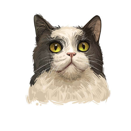Manx Cat Manks breed of domestic cat Felis catus, short tail. Stubbin, rumpy domesticated cat isolated on white. Digital art illustration of hand drawn kitty for web. Kitten breed of domestic pet.
